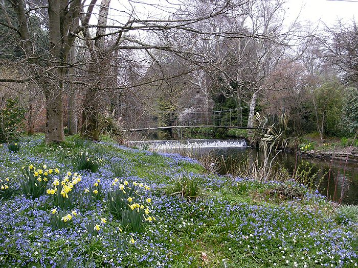 Spring at Mount Usher