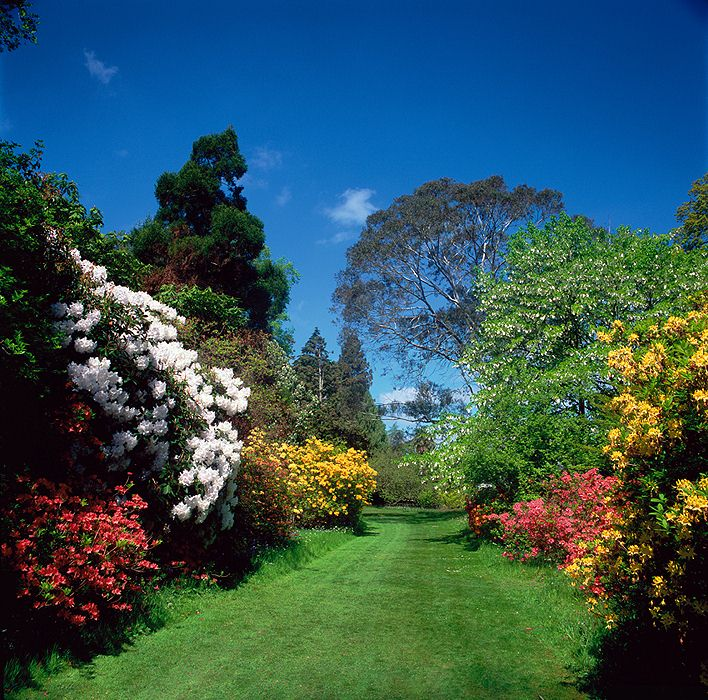 Summer at Mount Usher