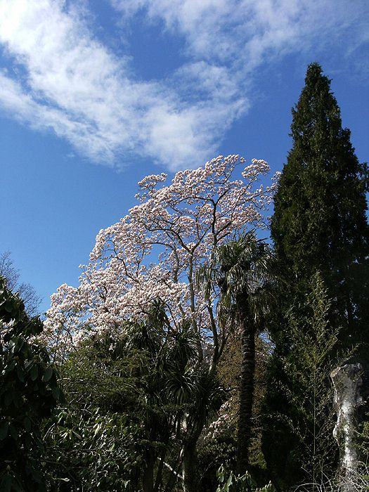 Spring at Mount Usher