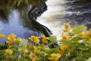 Mount Usher Gardens River